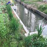 ホタル水路